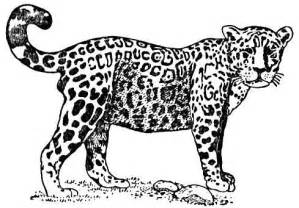 jaguar coloring pages jaguar coloring pages for jaguar colouring pages for