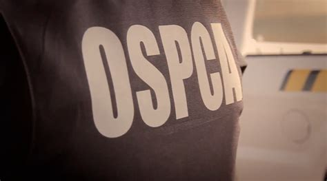 Can I Become Officer With Criminal Record How To Become An Ontario Spca Officer