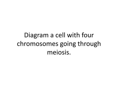 diagram a cell with four chromosomes going through meiosis ppt diagram a cell with four chromosomes going through