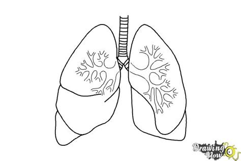 coloring pages of heart and lungs how to draw lungs drawingnow