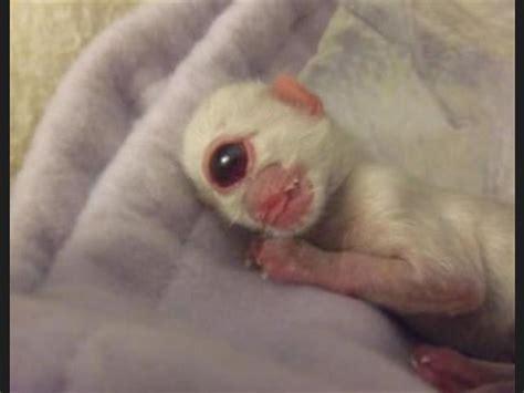 imagenes animales raros lista los 10 animales mas raros rarisimos del mundo