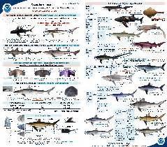saltwater identification chart - texas saltwater fish identification chart