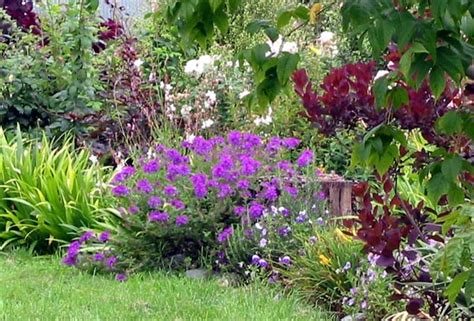 Garden Flowers Annuals Perennial Plants