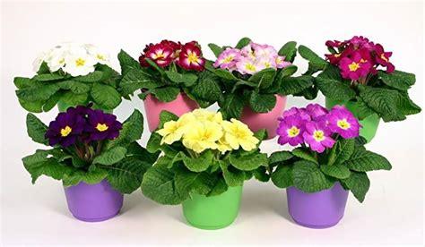 foto di vasi di fiori scegliere i vasi da giardino scelta dei vasi la scelta