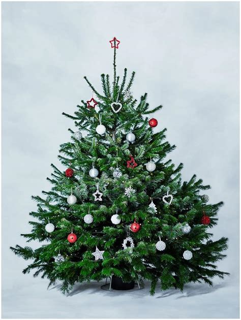 live decorated trees live decorated trees delivered 3 ts1 us
