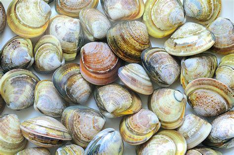 teste tribunale tossine nei molluschi tribunale ue dice no a vivisezione