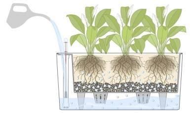 New Pot Hidroponik Wick System Mei membuat self watering pot ayo berkebun