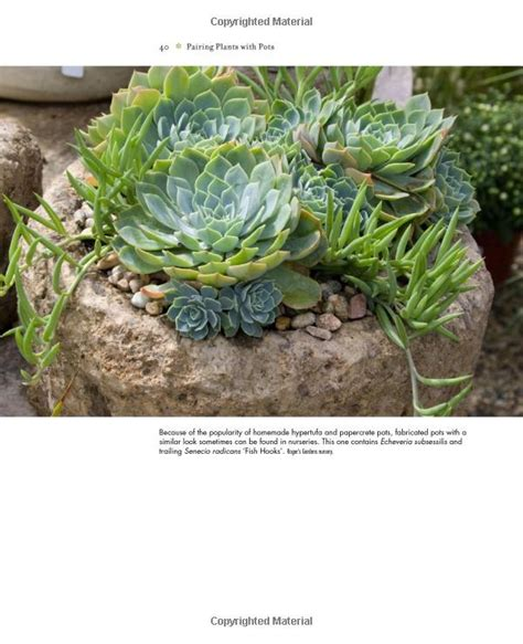 amazon succulents 1000 images about large succulent containers on pinterest