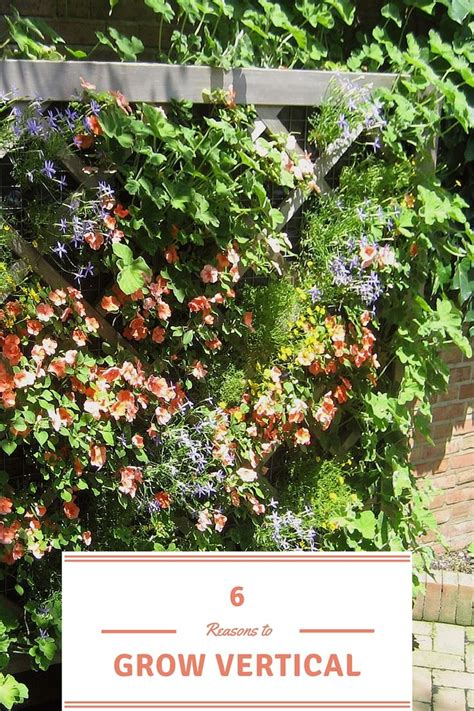 What Can You Grow In A Vertical Garden 6 Reasons To Grow Vertical Growing Your Vegetables