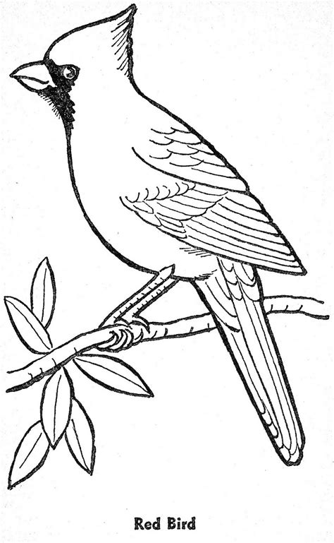 coloring pages of winter birds template for winter bird art lesson january winter
