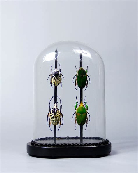 taxidermy victorian glass dome display