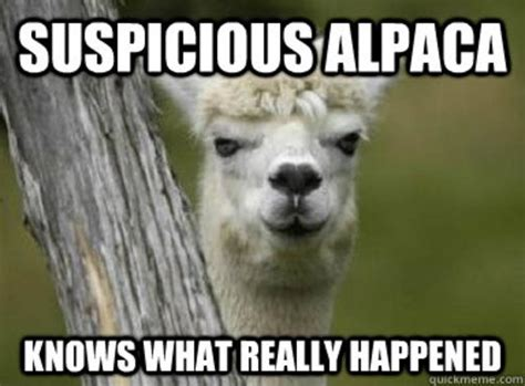 alpaca and llama memes alpacas and their less adored kin