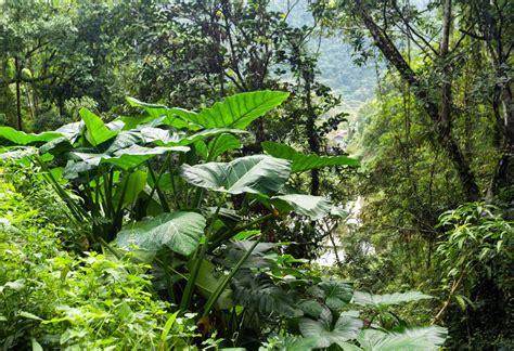 dschungel pflanzen lebendige exemplare der affenart saki aufgetaucht