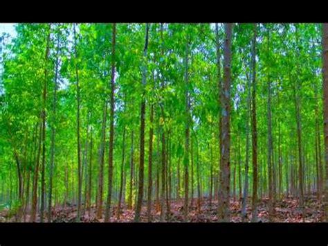 imagenes componentes naturales medio ambiente una mirada a nuestros recursos naturales