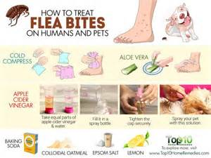 How To Get Rid Of Bed Bugs Home Remedy How To Treat Flea Bites On Humans And Pets Top 10 Home