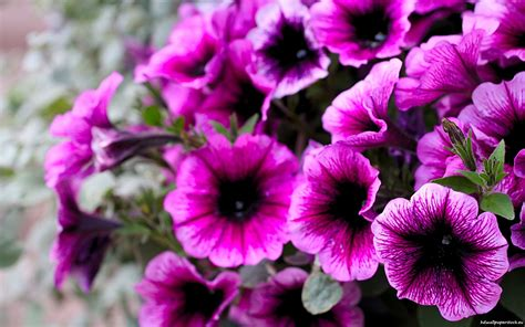 names of purple names of purple flowers with pictures 33 widescreen