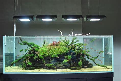 aquarium design criteria 1161 best images about fish tank on pinterest saltwater