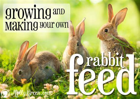 feeding rabbits naturallygrowing  making