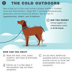 How To Keep A how to keep your pets safe and warm during cold weather