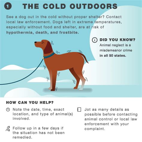 9 Tips On Keeping Your Outside Pet Safe From The Cold by How To Keep Your Pets Safe And Warm During Cold Weather