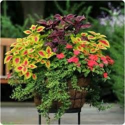 Design For Potted Plants For Shade Ideas Coleus I