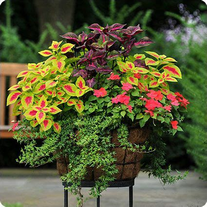 container gardens for shade 17 best images about outdoor flower container ideas on