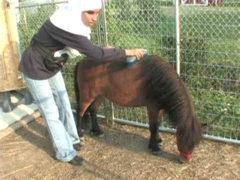 Caballo Poni Cojiendo Caballo Poni Folla Mujer | chicago un pony gu 237 a para una ciega musulmana youtube