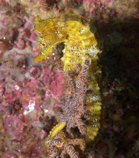 strange beautiful seahorses horse nation