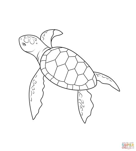 simple turtle coloring page simple sea turtle drawing turtles coloring pages free