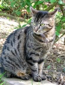 haus katze wer mit der katze geeggt hat wei 223 wie sie zieht