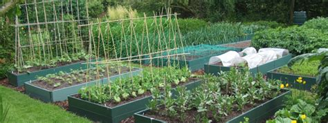 Best Vegetables To Grow In Raised Beds by How To Grow Plants In Raised Beds Thompson
