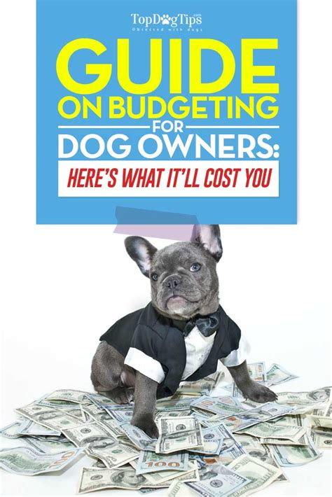 how much do cost for dogs how much does a cost budgeting guide for owners