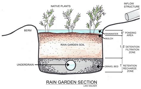 The How To Design A Rain Garden Layout What Is A Rain