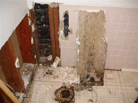 what is black mold in bathroom bon temps beignet total bathroom reno home interior