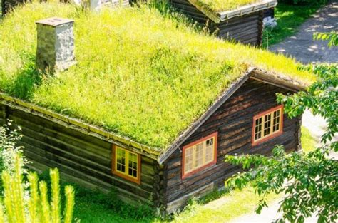 rooftop plants top 10 plants for a living roof inhabitat green design