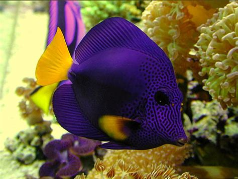pictures of colorful fish top 50 beautiful fish facts photos colorful wallpapers