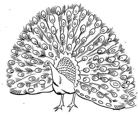 coloring page peacock bird peacock coloring pages free printable coloring pages
