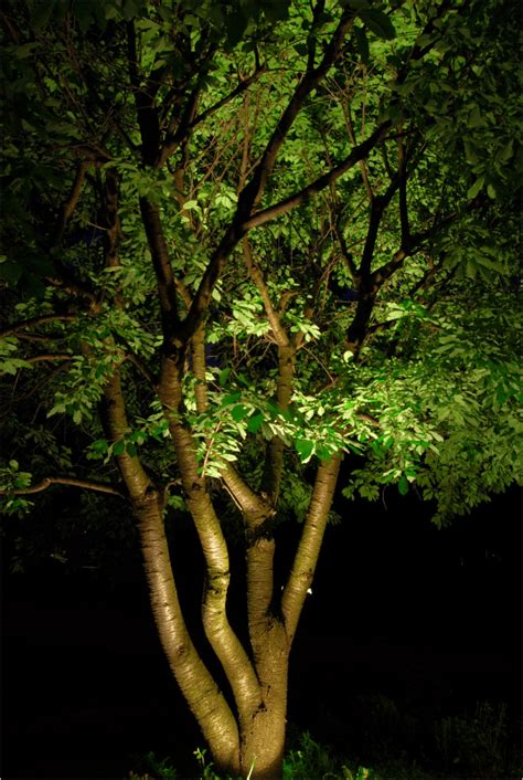 living tree lights out how to use landscape lighting techniques volt lighting