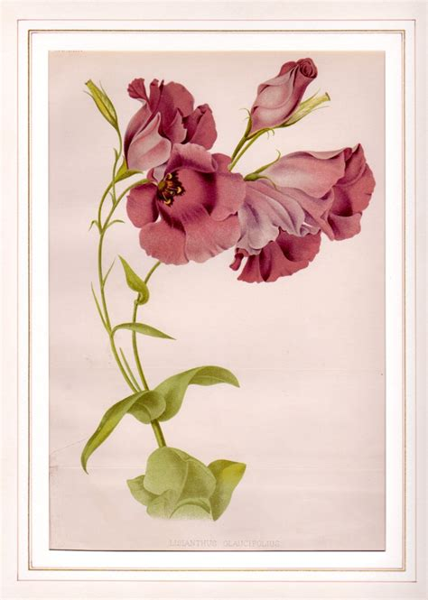 botanica fiori galleria garisenda di emanuela cavalleri catalogo ste