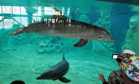 aquarium bed price aquarium prices 650 gallon fish tank aquarium bed 2017