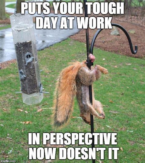 Squirrel Nuts Meme - blind squirrel generator memes