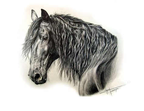 imagenes a lapiz de caballos dibujo caballo lapiz imagui