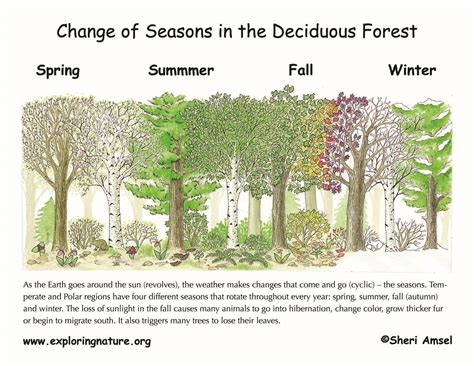 seasons and celestials an coloring book books changing seasons the tilted earth