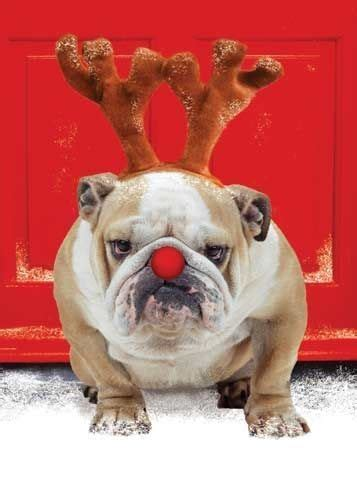 cute christmas dog pictures   images  facebook tumblr pinterest  twitter
