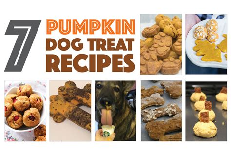 pumpkin treats for dogs 7 pumpkin treat recipes to make for your the