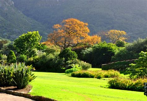 kirstenbosch botanical gardens indigenous plants 10 must see places in cape town viral feed south africa