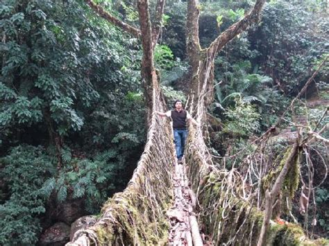 what is root bridge general knowledge double decker root bridge in cherrapunji