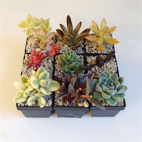 Succulents Pots For Sale | quality mini cactus succulent pots for sale