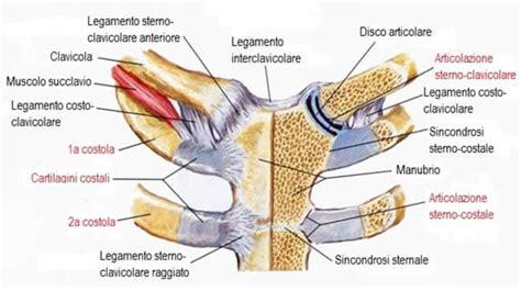bozzo in testa tumore le 5 articolazioni della spalla