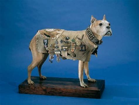 Was Sgt Stubby A Pitbull Meet Sgt Stubby The War Who Trained At C Yale This Just In Yale Alumni Magazine
